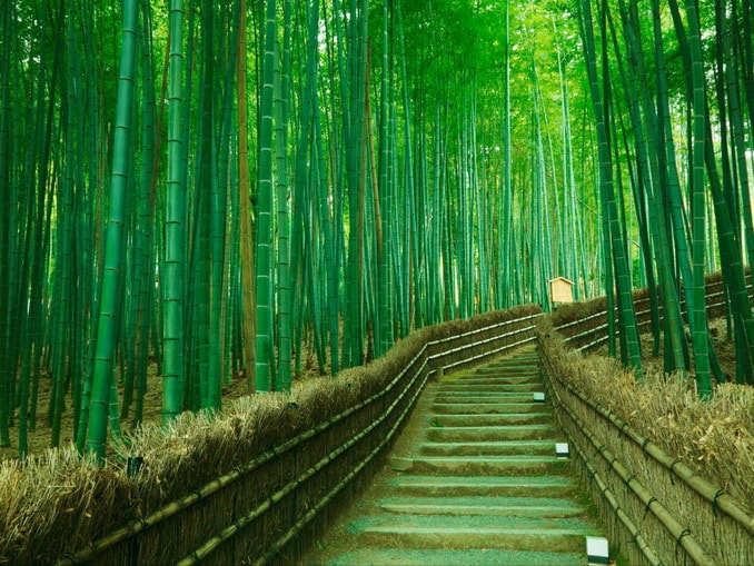 Kyoto  Day Tour Package